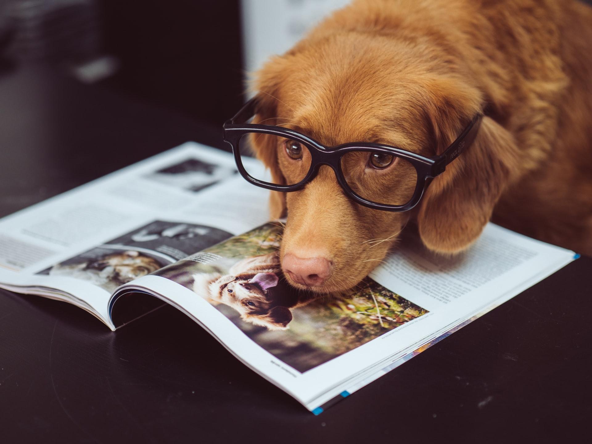 分析する犬