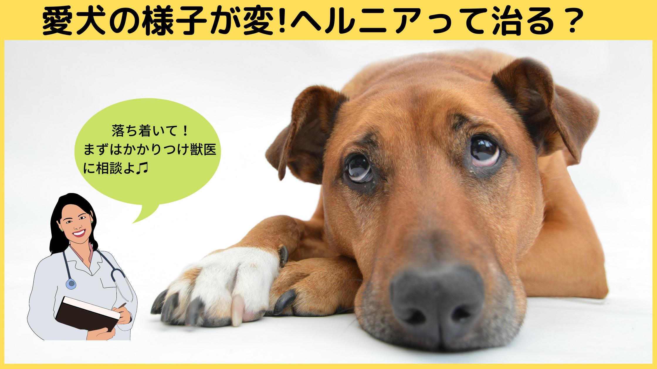 ヘルニアの犬画像